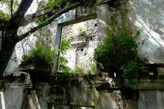 灌木和草在墙壁上发芽了 库存图片