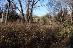 灌木在公园 免版税库存图片