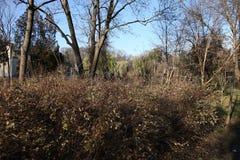 灌木在公园 库存照片