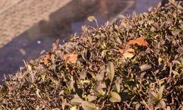 灌木在晚秋天 库存照片