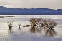 灌木在湖 免版税库存照片