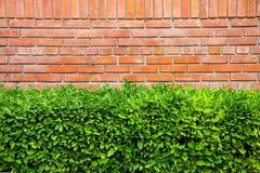 灌木墙壁 图库摄影