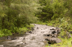 灌木小河 库存照片