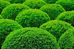 灌木庭院 免版税库存图片