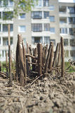 灌木树桩 免版税库存图片