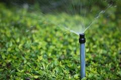 灌木水 免版税库存图片