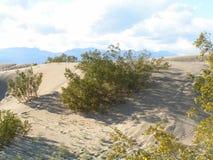 灌木沙漠 库存照片