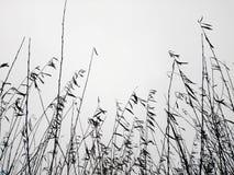 灌木的分支反对天空的 免版税库存图片