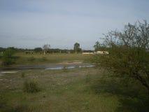 灌木的河 免版税库存图片