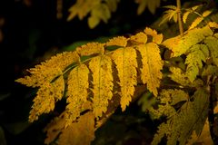 灌木的黄色分支在秋天森林里 免版税库存照片