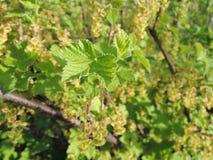 灌木的绿色叶子在庭院里 免版税库存图片