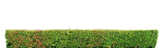 灌木篱芭 图库摄影