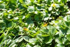 灌木绿色叶子  库存图片