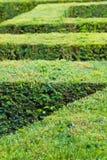 灌木绿色迷宫 免版税图库摄影