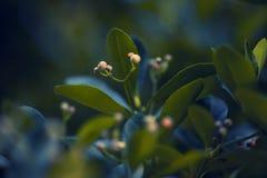 灌木绿色 免版税库存照片