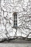 灌木视窗 库存照片