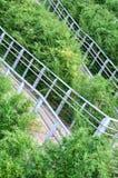 灌木迂曲路径 免版税库存图片