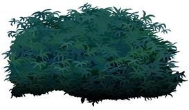 灌木 免版税库存图片