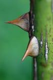 灌木dof低上升了 免版税库存图片