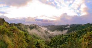灌木wairarapa 图库摄影