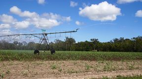 灌溉喷水隆头澳大利亚 免版税图库摄影