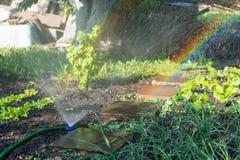 灌溉喷水隆头在有菜的一个庭院里 免版税库存照片