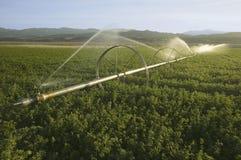 灌溉喷水隆头 库存照片