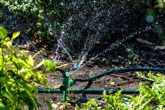 灌溉工作的浪花在庭院里 图库摄影