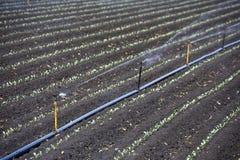 灌溉工厂 免版税图库摄影