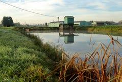 灌溉池塘 库存图片