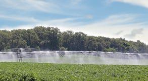 灌溉的大豆领域 免版税库存图片