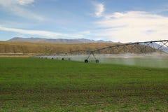 灌溉的牧场地 库存图片