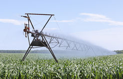 灌溉的玉米 免版税图库摄影
