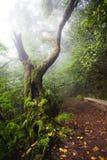 灌溉运河在有雾的天气的马德拉岛的森林里 库存照片