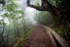 灌溉运河在有雾的天气的马德拉岛的森林里 免版税库存照片