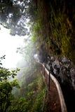 灌溉运河在有雾的天气的马德拉岛的森林里 免版税图库摄影
