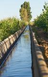 灌溉运河玉米庄稼 库存图片