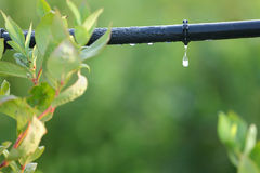 水滴灌溉系统关闭 库存照片