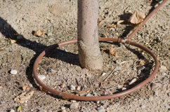 水滴灌溉 图库摄影