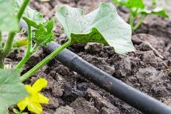 水滴灌溉系统 图库摄影