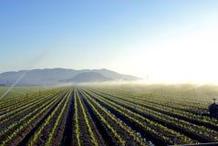 灌溉 库存照片