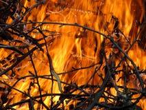 火吞食的枝杈 免版税库存图片
