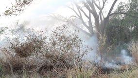 火和烟在干草,喷水 股票录像