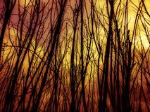 火和烟在森林里 库存图片