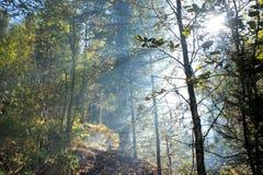 火在具球果森林里 库存照片