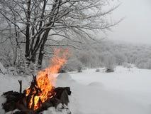 火在冬天森林里 库存图片