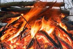 火在冬天森林 火明亮的火焰 免版税库存图片