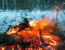 火在冬天森林 火明亮的火焰 免版税库存照片