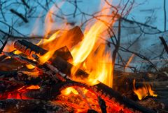 火在冬天森林 火明亮的火焰 免版税图库摄影