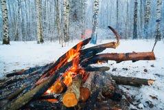 火在冬天森林 免版税库存照片